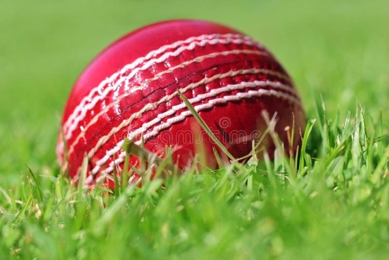 cricket piłkę obraz royalty free