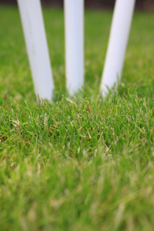 Cricket Stumps royalty free stock images