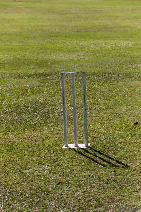 cricket photos libres de droits