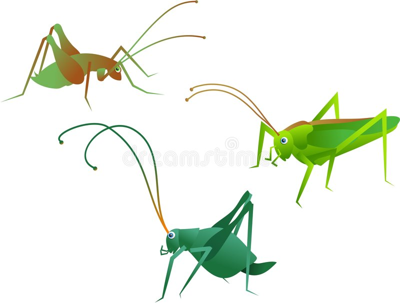 Crickets. Insects vector illustration