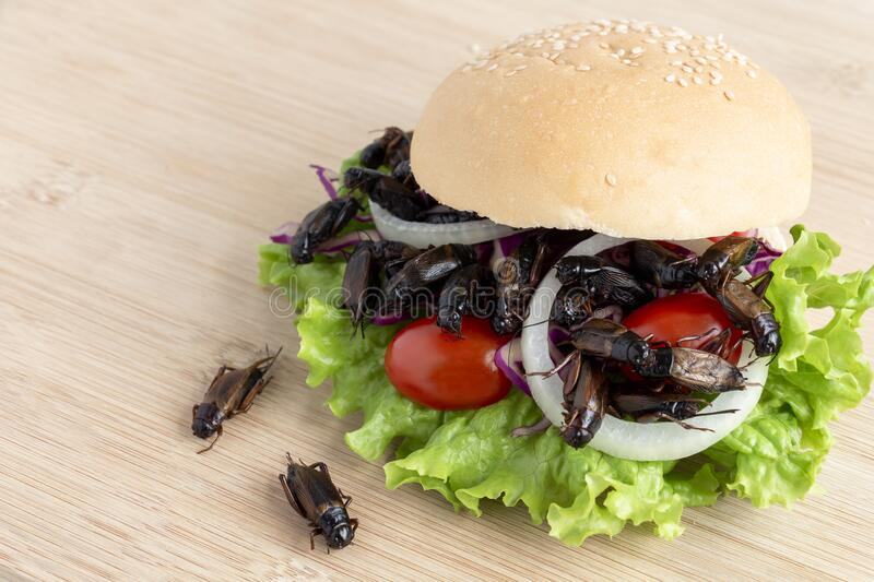 Crickets insect for eating as food items in bread burger made of fried insect meat with vegetable on wooden table it is good royalty free stock photo