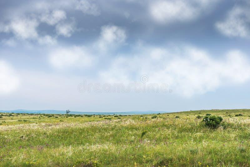 Crimea steppe- landscape park. Kerch peninsula. Sights of Crimea - lush vegetation, steppe zone in the spring. Landscape park- Kerch peninsula stock image