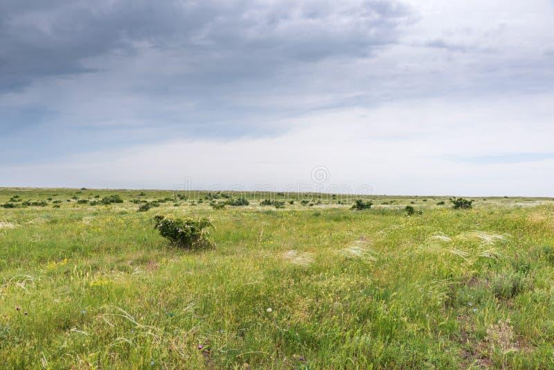 Crimea steppe- landscape park. Kerch peninsula. Sights of Crimea - lush vegetation, steppe zone in the spring. Landscape park- Kerch peninsula stock photo