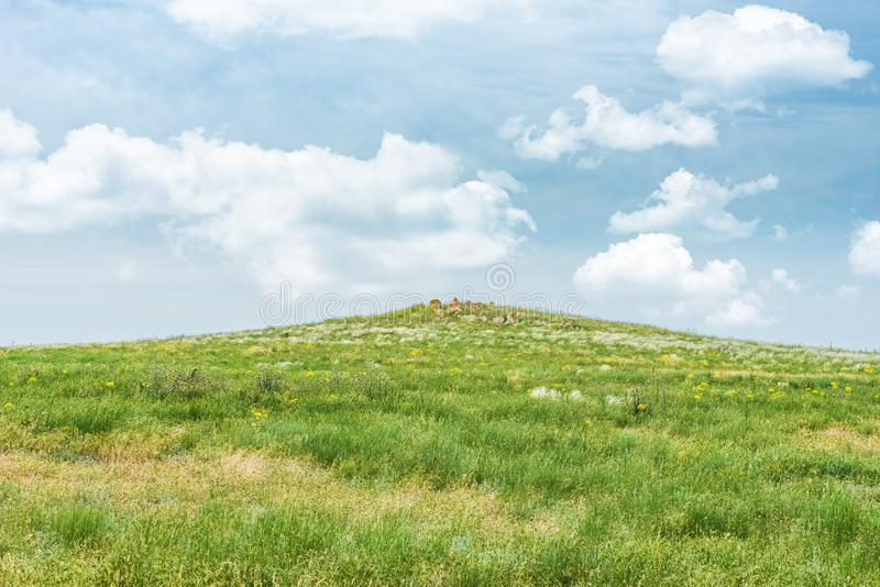 Crimea steppe- landscape park. Kerch peninsula. Sights of Crimea - lush vegetation, steppe zone in the spring. Landscape park- Kerch peninsula royalty free stock images