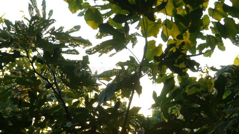 crimean O sol brilha através das folhas de uma árvore fotos de stock royalty free