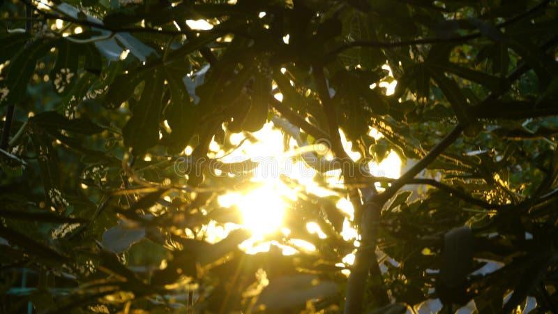 crimean O sol brilha através das folhas de uma árvore fotos de stock