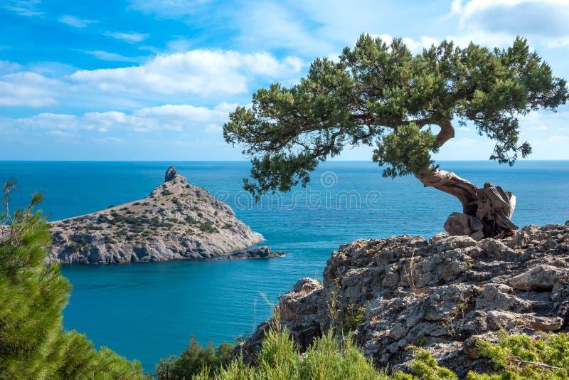 Crimean sörja på en klippa som förbiser havet arkivfoto