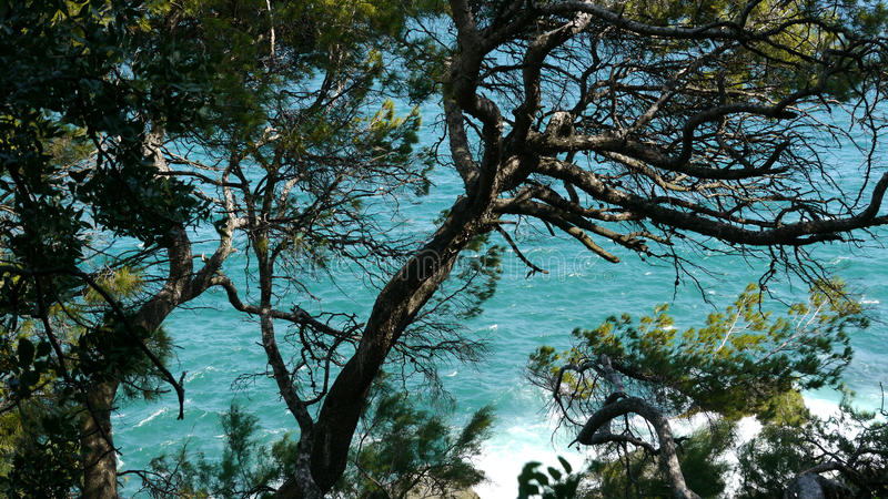 crimean Sea pedras Árvores imagem de stock