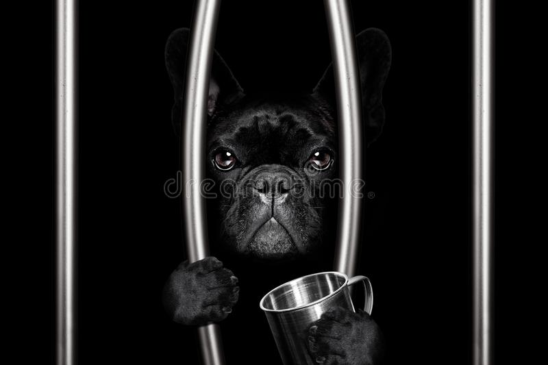 Dog behind bars in jail prison royalty free stock images
