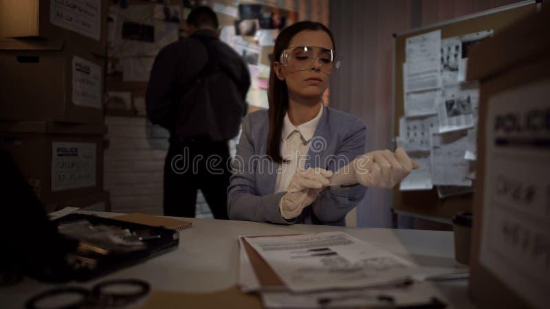 Criminologista femminile che indossa i guanti per esaminare prova, abilità professionali immagine stock libera da diritti