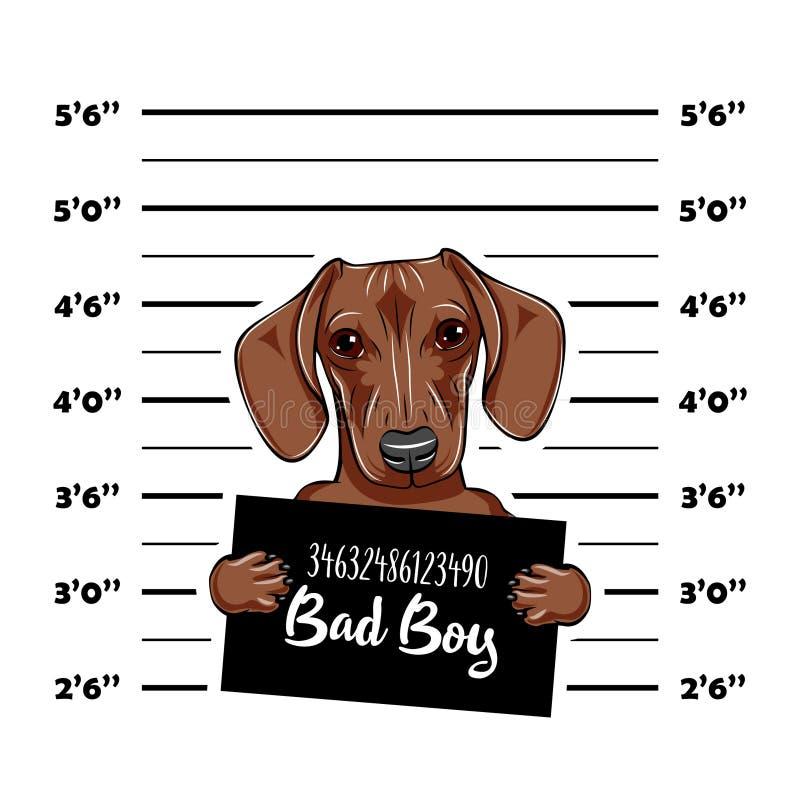Criminoso do cão do bassê Mugshot da polícia Condenado do cão Prisão do cão Vetor ilustração royalty free