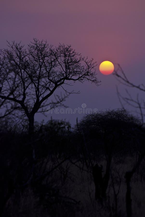 Crimson african sunet stock photography