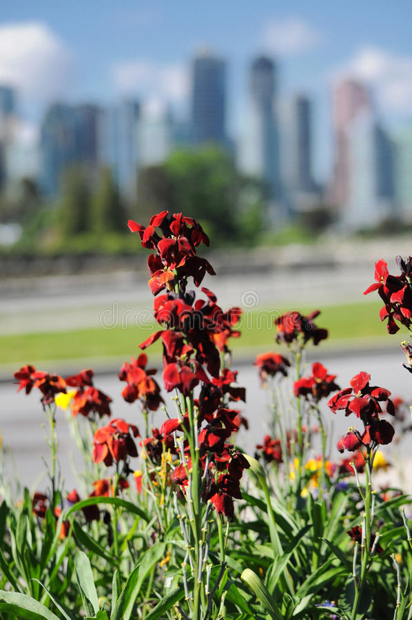 Download Crimson Flowers stock image. Image of skyline, nature - 35492097