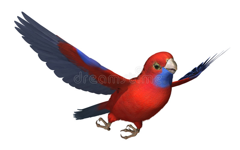 crimson flygpapegojarosella stock illustrationer