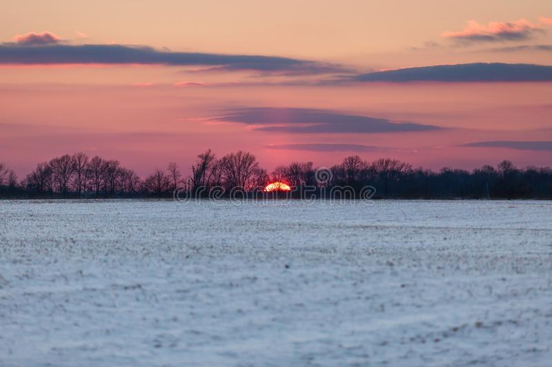 Crimson Sunset over Snowy American Corn Fields in Winter with Bl royalty free stock image