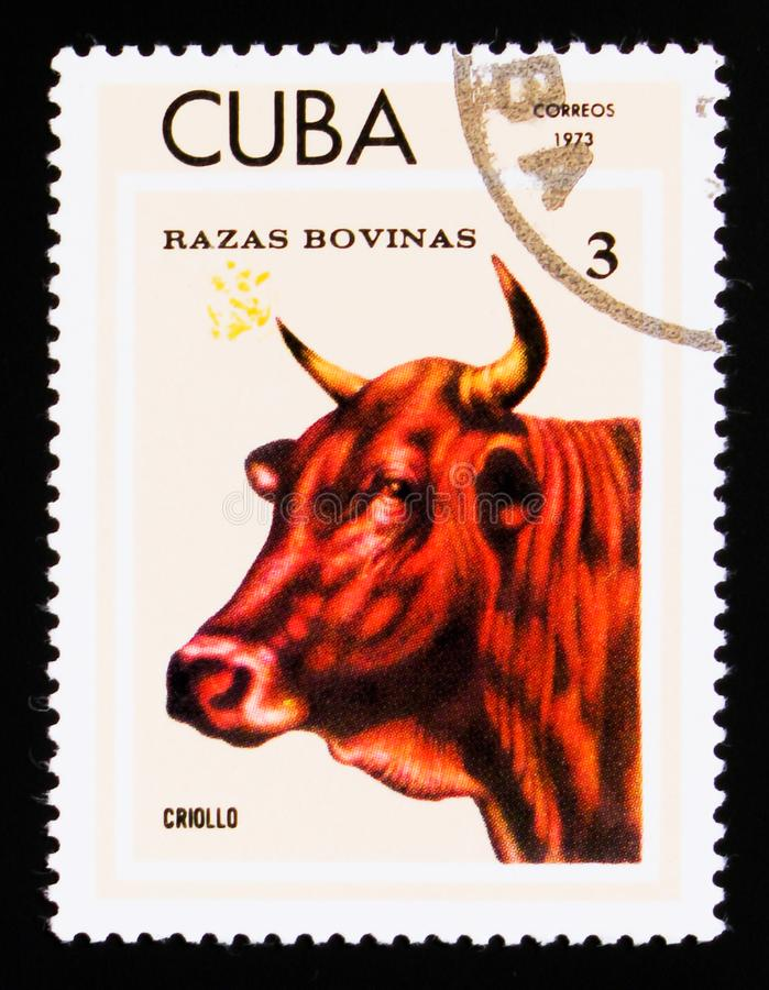 Criollo Bos primigenius taurus, Breeds of cattle serie, Cuban circa 1973. MOSCOW, RUSSIA - SEPTEMBER 3, 2017: A stamp printed in shows Criollo Bos primigenius stock photo