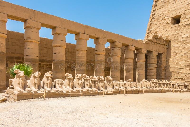 Criosphinxes - kózka głowiaści sfinksy w antycznym mieście Thebes, dzień Luxor, Egipt zdjęcie royalty free