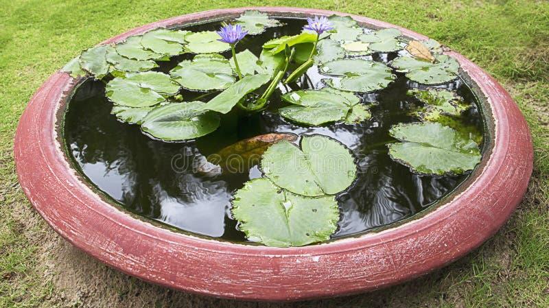 Criou artificialmente a lagoa para Lotus azul, lírios de água em Vietname como uma decoração no parque, fundo imagens de stock