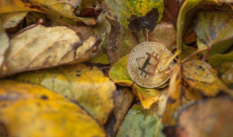 Criptocurrency: sustainnability del consumo de energía del bitcoin imagenes de archivo