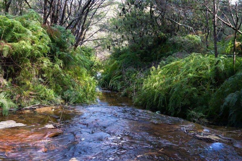 Crique australienne de buisson, Wentworth Falls images stock