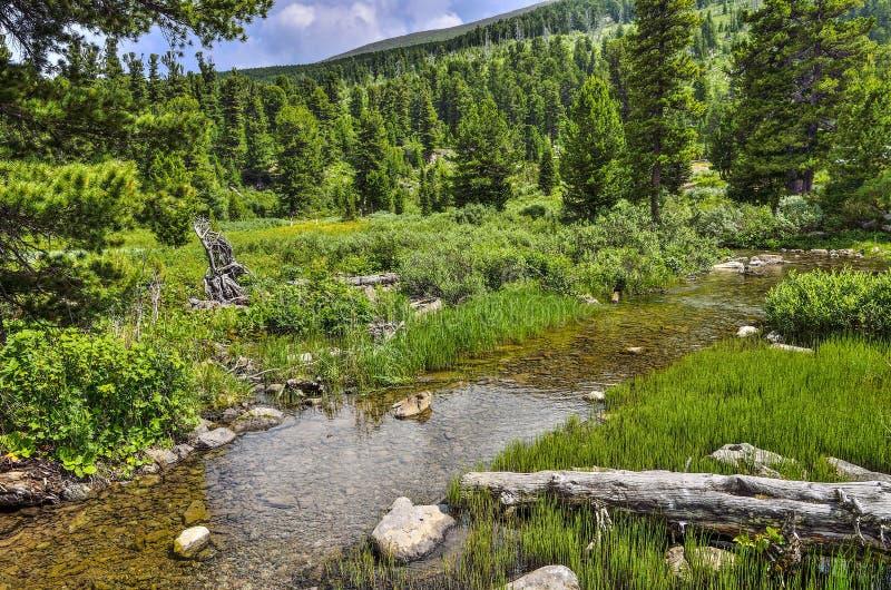 Crique claire de montagne avec de l'eau transparent traversant une vallée verte de montagne images libres de droits