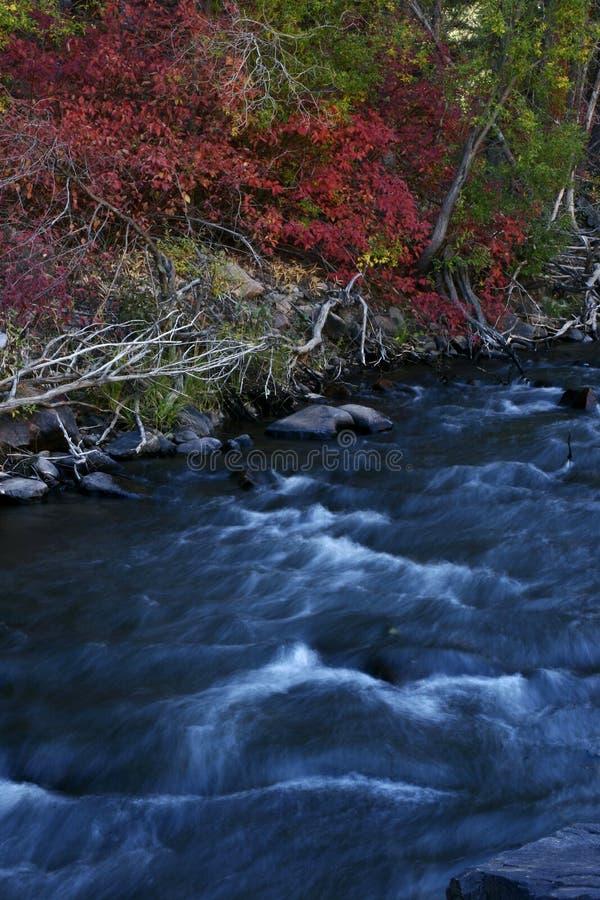 Crique d'automne photo stock