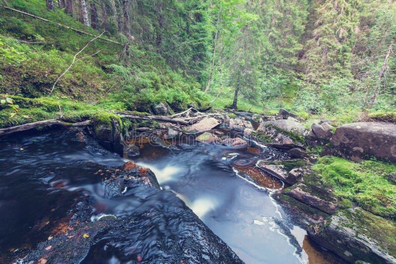 Download Crique dans la forêt image stock. Image du montagne, extérieur - 76076391