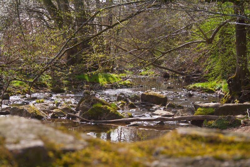 Crique dans les bois avec des pierres image stock