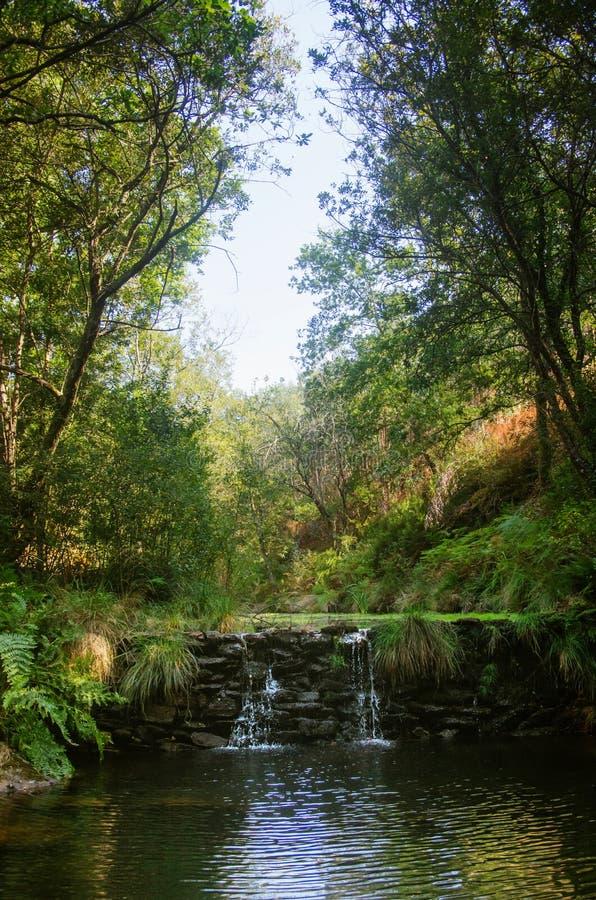 Crique de cascade photos stock