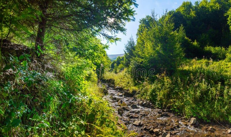 Crique de courant de montagne dans les pierres et banques d'herbe verte dans la forêt de montagne image libre de droits