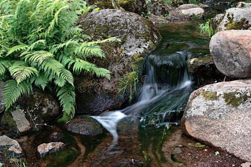 Crique de forêt photo stock
