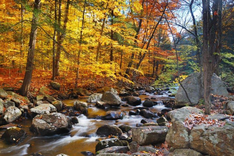 Crique de forêt d'automne images libres de droits
