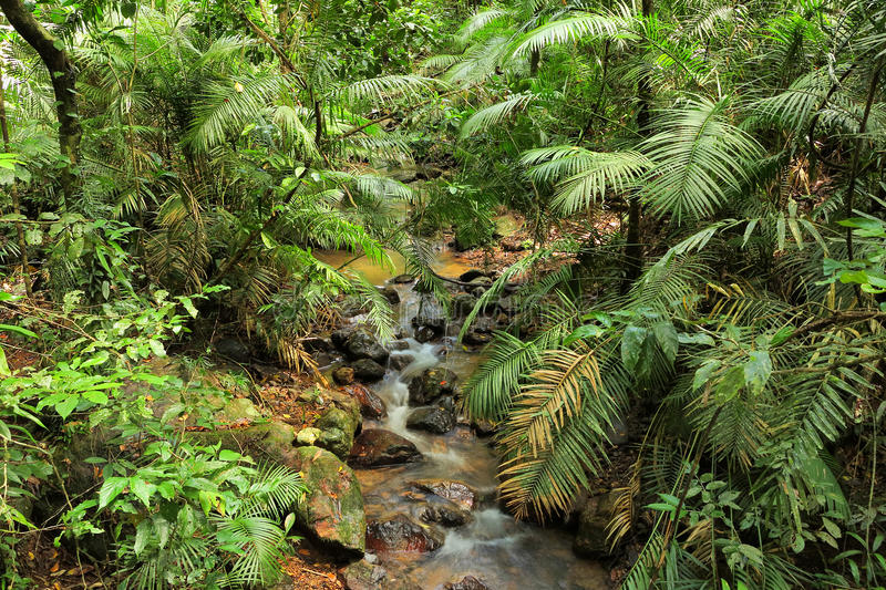 Crique de jungle photo libre de droits