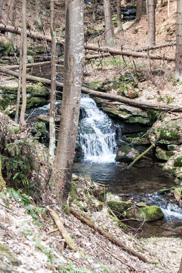 Crique de montagne avec des cascades et des arbres autour photos stock