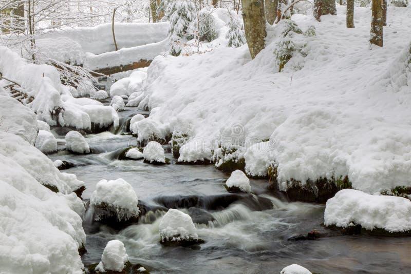 Crique en hiver photographie stock libre de droits