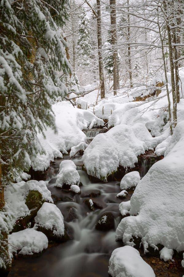 Crique en hiver photo stock