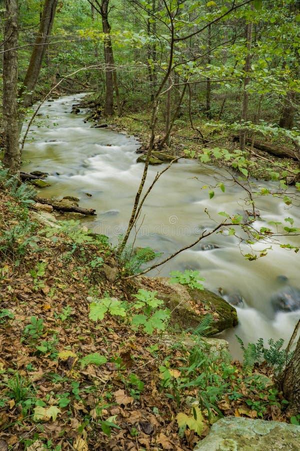 Crique et forêt courues par hurlement photo stock