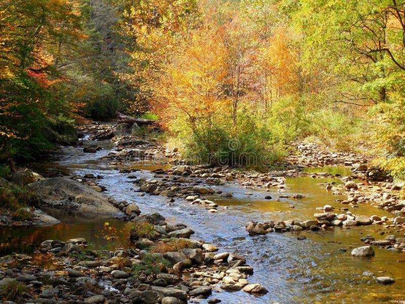 Crique et forêt de rivière de montagne dans la chute avec des réflexions images libres de droits