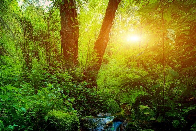 Crique et pierres merveilleuses de forêt tropicale au coucher du soleil photos libres de droits
