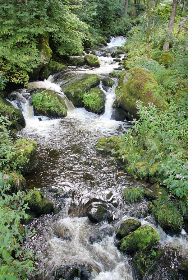 Crique flottant dans la forêt tropicale 5874 image stock