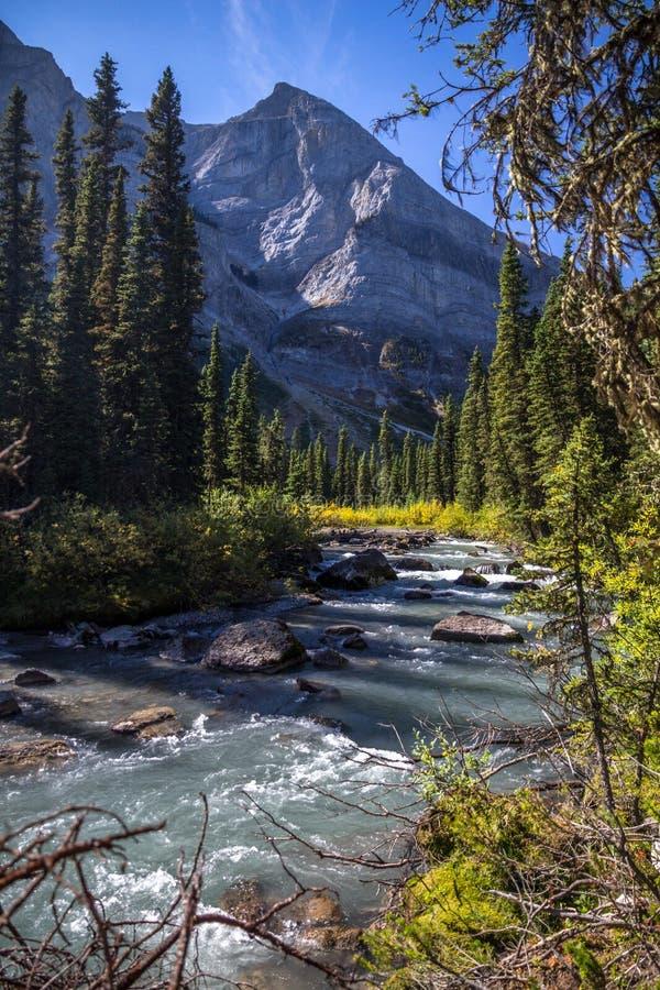 Crique fluide près de lac supérieur Kananaskis, Alberta, Canada photographie stock
