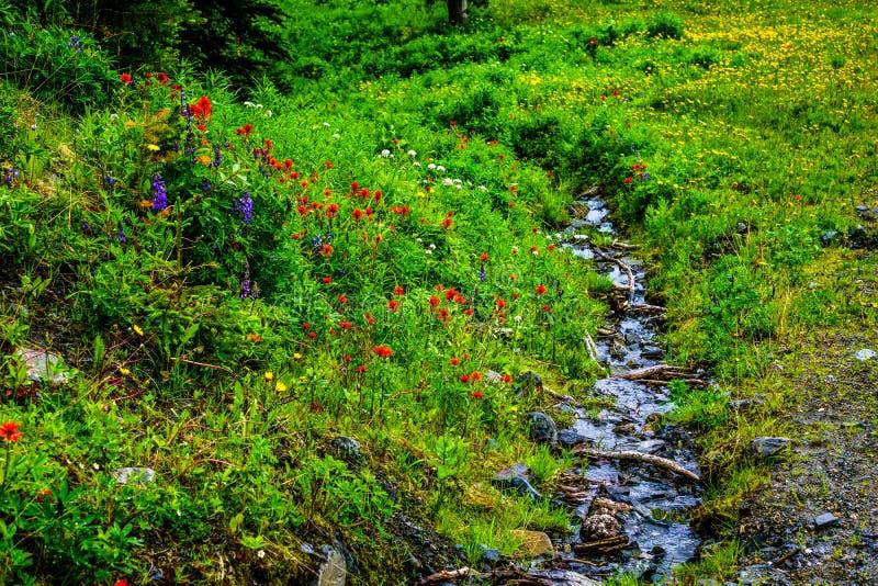 Crique fonctionnant par les fleurs sauvages sur Tod Mountain photo libre de droits