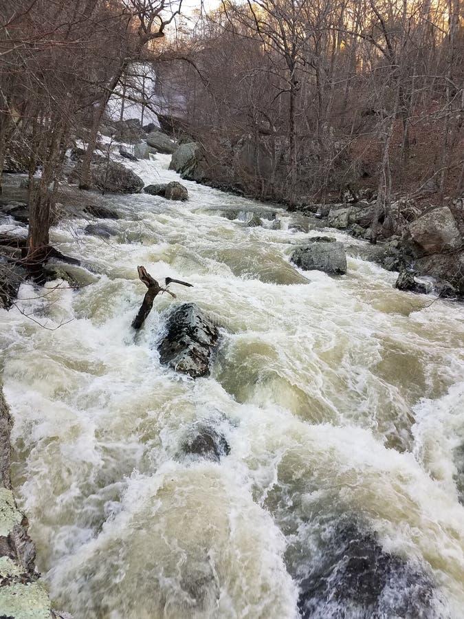 Crique jaune à l'étape d'inondation images stock