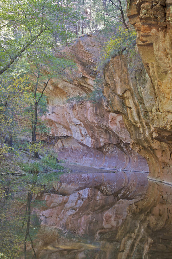 Crique occidentale de chêne de fourchette dans l'automne photo libre de droits