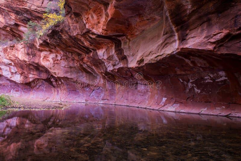 Crique Sedona 2 de chêne de mur de canyon photos stock