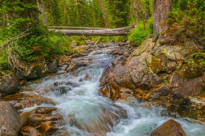Crique Tetons grand de cascade photos stock