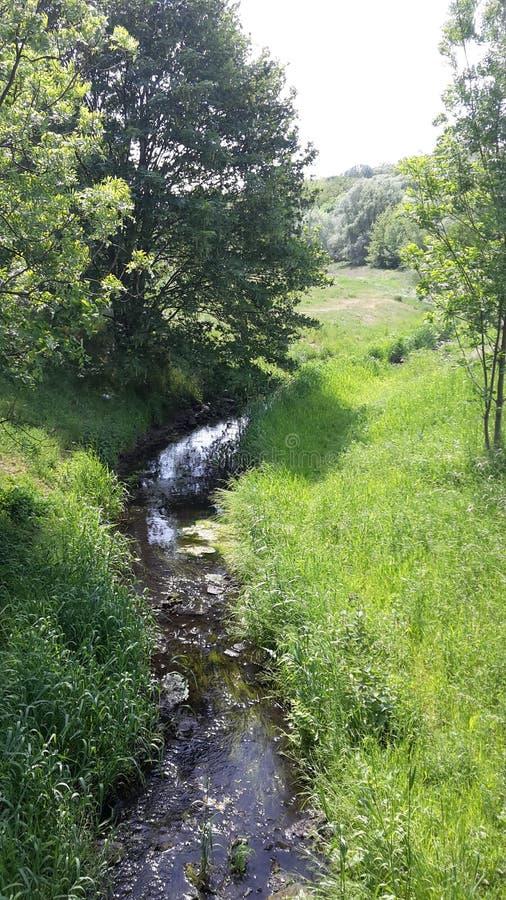 Crique verte photographie stock libre de droits