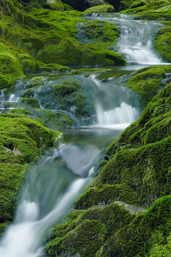 Crique Verte Photos libres de droits