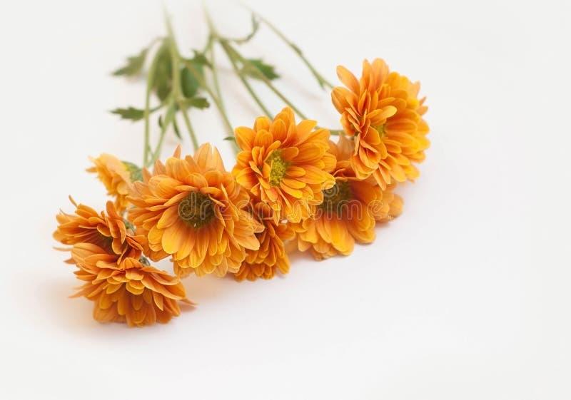 Crisântemo alaranjado no fundo branco Ramalhete da flor fotos de stock royalty free