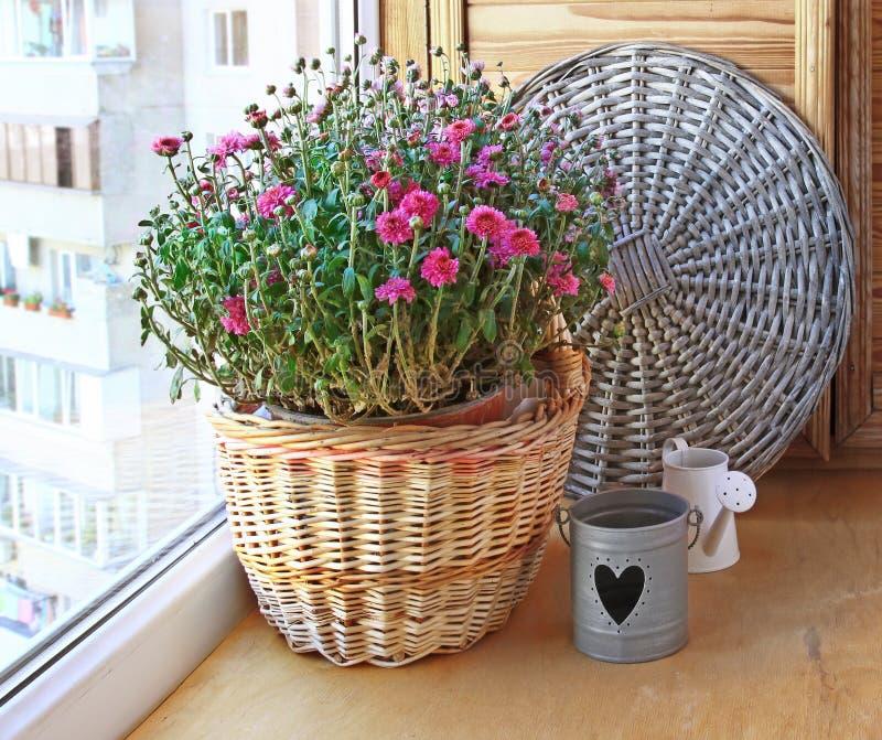 Crisântemo do Lilac em uma cesta em um balcão imagem de stock royalty free